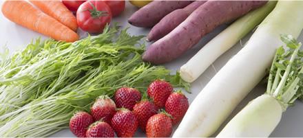 地場産野菜いろいろ